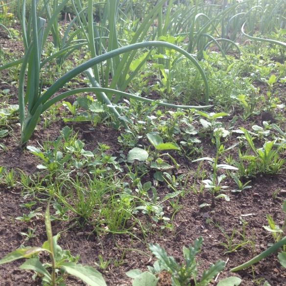 Inte bara grönsakerna som växer...